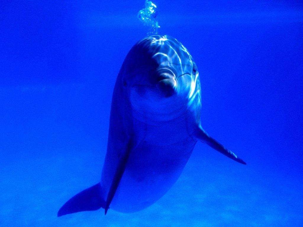 delfin-blau